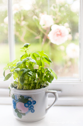 Basil-and-roses-window