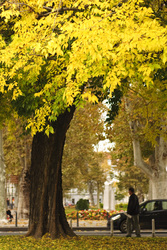 Yellow%20tree%20man%20and%20a%20car%20zrinjevac