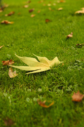 A%20leaf%20on%20the%20grass